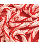 CANDY CANE BLISS FRAGRANCE OIL - 4 OZ - FOR CANDLE & SOAP MAKING BY VIRG... - $9.46