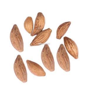 Zimt Zwerg Bäume Samen Bonsai Tree Seeds Hausgarten Pflanzen ElR8
