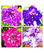 107pcs/bag Petunia flower Garden,Petunia Night Sky flower,bonsai flower ... - $6.39