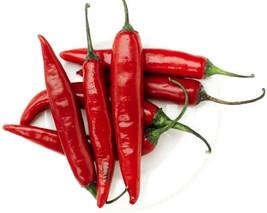 Organic Heirloom 500 Seeds Chili Chilli Chile Red Fruit Vegetable Bulk S... - $8.99