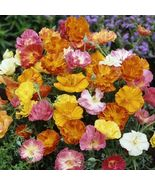 SHIP From US, 100 Seeds Ballerina Mixed California Poppy, DIY Home Flowe... - $33.99