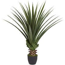 4' Spiked Agave Plant - $135.99