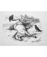 1801 ORIGINAL ETCHING Print by Howitt - HORSE Dying Sad Eyes Ravens Waiting - $20.92