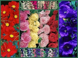 Old Timey Special, Tall Varieties, 5 Full Size Packs, Heirloom Flower Seeds - $20.39