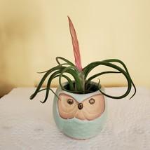 "Owl Planter with Air Plant, 2.5"", sea green ceramic pot, Tillandsia airplant"
