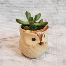 Owl Planter with Succulent, Many Fingers Sedum Pachyphyllum, Bird Animal Planter image 3