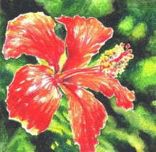 """Akimova: HIBISCUS, watercolor, flower,red, size approx.5.25""""x5.25"""" - $10.00"""
