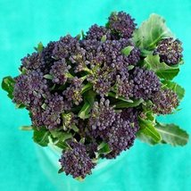4 Grams Seeds of Purple Sprouting Broccoli - $25.05