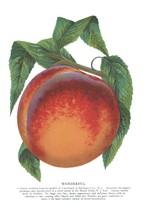 Seed Catalog: Wonderful - Seneca Seed Catalog - 1893 - $12.95+