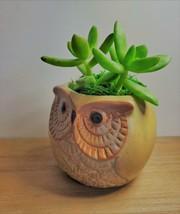 """Golden Sedum Succulent in Ceramic Owl Planter, Live Plant, 2.5"""" Animal Pot image 2"""