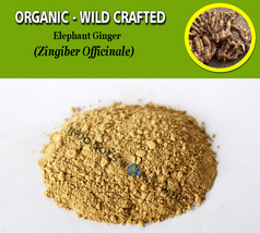 POWDER Elephant Ginger Zingiber Officinale Organic Wild Crafted Natural Herbs - $7.99+