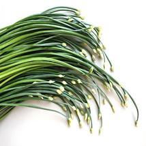 200Pcs Garlic Chives Herb Seeds Allium Tuberosum Seed Vegetable Seed - $19.27