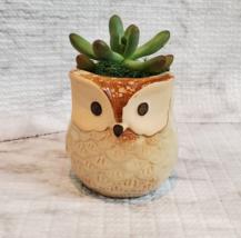 Owl Planter with Succulent, Many Fingers Sedum Pachyphyllum, Bird Animal Planter image 1