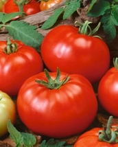 Beefsteak tomato seeds   125 seeds same day shipping1 thumb200