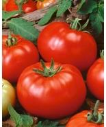 Non-GMO Beefsteak Tomato - 125 Seeds - $7.99