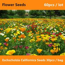 300 Bulk Seeds SEDUM RUSSIAN STONECROP Sedum Kamtschaticum
