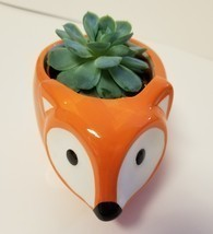 "Echeveria Elegans Succulent Ceramic Pot Live Plant 5"" Orange Flora Fox Planter - $19.99"