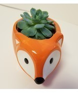 "Echeveria Elegans Succulent Ceramic Pot Live Plant 5"" Orange Flora Fox P... - £15.97 GBP"