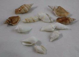Sea Shell lot of 13 Shells Conch Shells assorted - $16.83