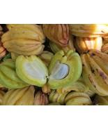 Garcinia Gummi Gutta Tree Seed PACKET , Garcinia Cambogia Seed, Brindleb... - $3.99
