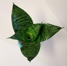 "Bird's Nest Succulent in Blue Self-Watering Planter, Snake Plant Sansevieria 3"" image 2"