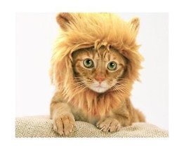 Prymal Lion Mane Dog Cat Costume. This Pet Costume Turns Your Cat or Sma... - €17,60 EUR