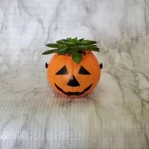 Live Succulent in Mini Halloween Planter, Pumpkin Jack O'Lantern Skull Cauldron image 5