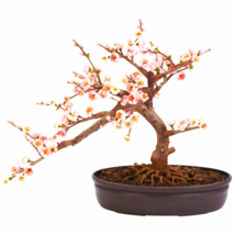 Cherry Blossom Bonsai Silk Tree - $63.55