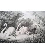 AESOP FABLES Animals Black Raven & White Swans - 1811 Original Etching P... - $21.60
