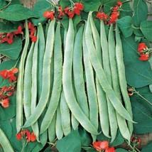 10 Scarlet Runner Bean Seeds 2019 (All Non-Gmo Heirloom Vegetable Seeds!) - $3.96