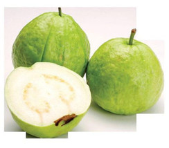 GUAVA tropical fruit Psidium guajava exotic tree edible guayaba 30 SEEDS... - $20.00