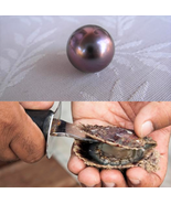 Round Deep Purple Akoya Pearl In Oysters Vacuum Packed 6-7mm 20pcs - $59.99