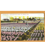 Antique Tinted Color Post Card, Flower Gardens at Holland, Michigan (1911)  - $12.50