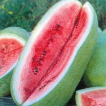 BEST PRICE Charleston Grey Watermelon, AM DIY Home Garden Fruits 50 Seeds - $43.99