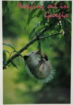Hanging Out In Georgia 4Th State The Peace State Baby Possum On Branch P... - $14.50