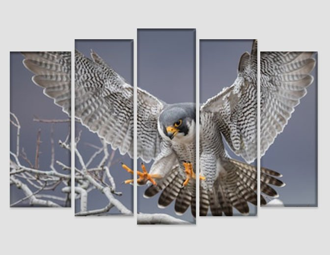 Peregrine Falcon Canvas Print Wild Nature Wall Art Hawk Photography Poster Hunte