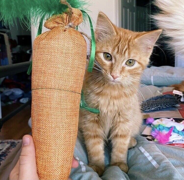 Primary image for Cat toy Catnip Filled Carrot