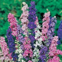 2250 seeds, or 1/4 oz - Rocket Larkspur Mix - Premium Fresh Delphinium S... - $9.90