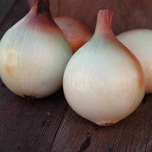 SHIP FROM US WALLA WALLA ONION SEEDS ~2 Oz PACKET SEEDS - HEIRLOOM, NON-... - $90.96