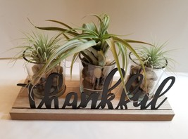 Airplants in Holder 3-pc Thankful Thanksgiving Centerpiece Air Plant Display - $35.99