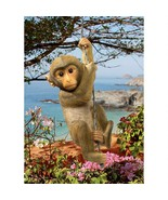 Exotic Climbing Rope Baby Chimpanzee Monkey Wildlife Yard and Garden Statue - $54.40