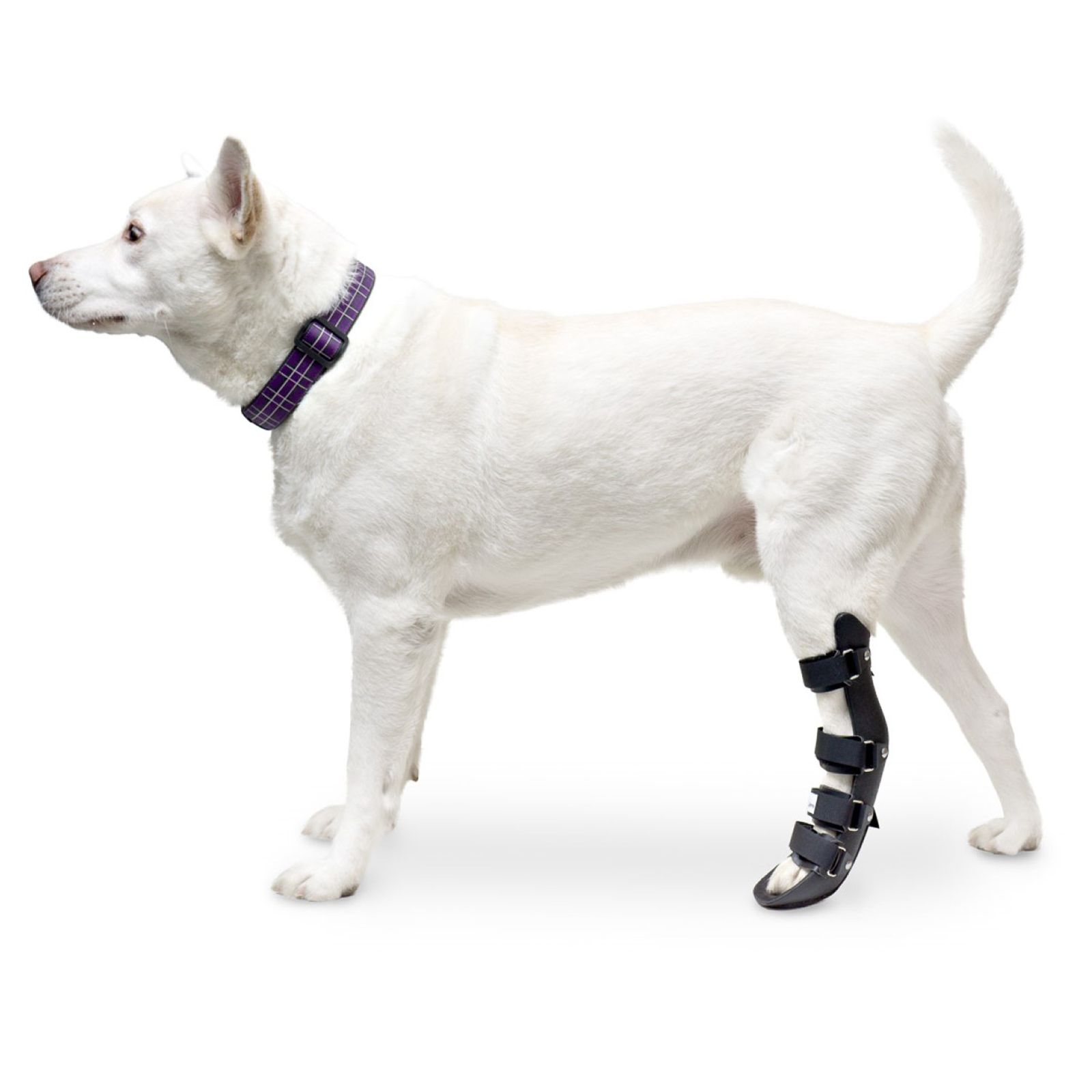 Primary image for Pet Splint for Dogs | Dog Rear Foot Splint Helps Brace Lower Back Limbs | Comes