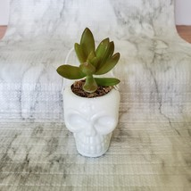 Live Succulent in Mini Halloween Planter, Pumpkin Jack O'Lantern Skull Cauldron image 3