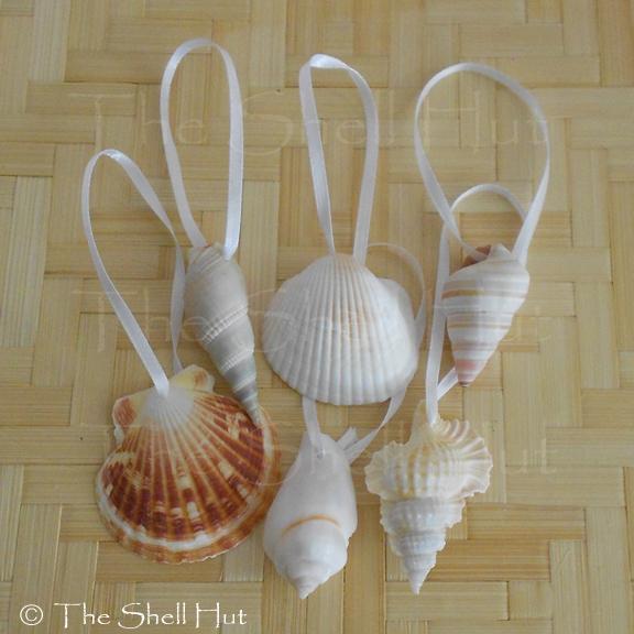 Seashell Christmas Ornaments Drilled Shell Natural Beach House Mermaid Lot #90