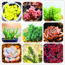 New Seeds 2018!Rare Succulents Seeds Lithops Seeds Pseudotruncatella 100... - $4.69