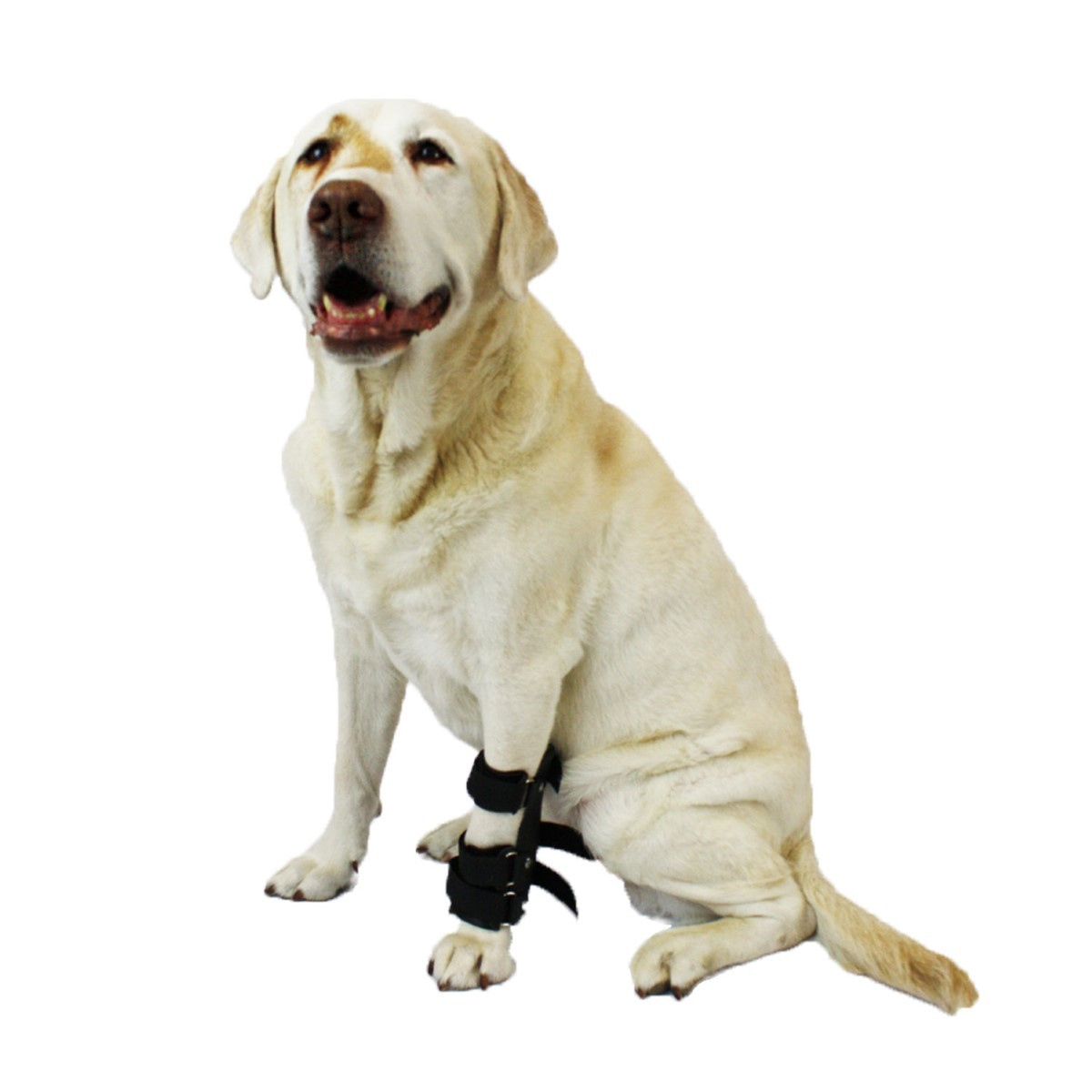 Primary image for Pet Splint for Dogs | Dog Carpal Foot Splint For Dogs with Arthritis and Injurie
