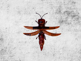Recycled Metal Grasshopper Garden Ornament, Insect art, insect wall moun... - $27.95