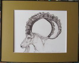 Ibex, Wild Goat Framed Wildlife Art Print Pen and Ink Animal Drawing Fra... - $36.00