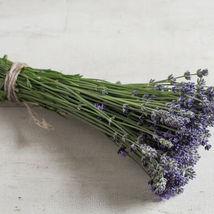 Munstead Purple Lavender Seed  / Lavender Flower Seeds - $17.00