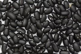 50 BLACK BEAN (Black Turtle Bush Bean) Phaseolus Vulgaris Vegetable Seeds - $2.97